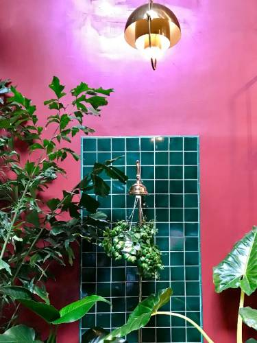 A bright pink wall with a section of green square tiling is the backdrop for plants on display